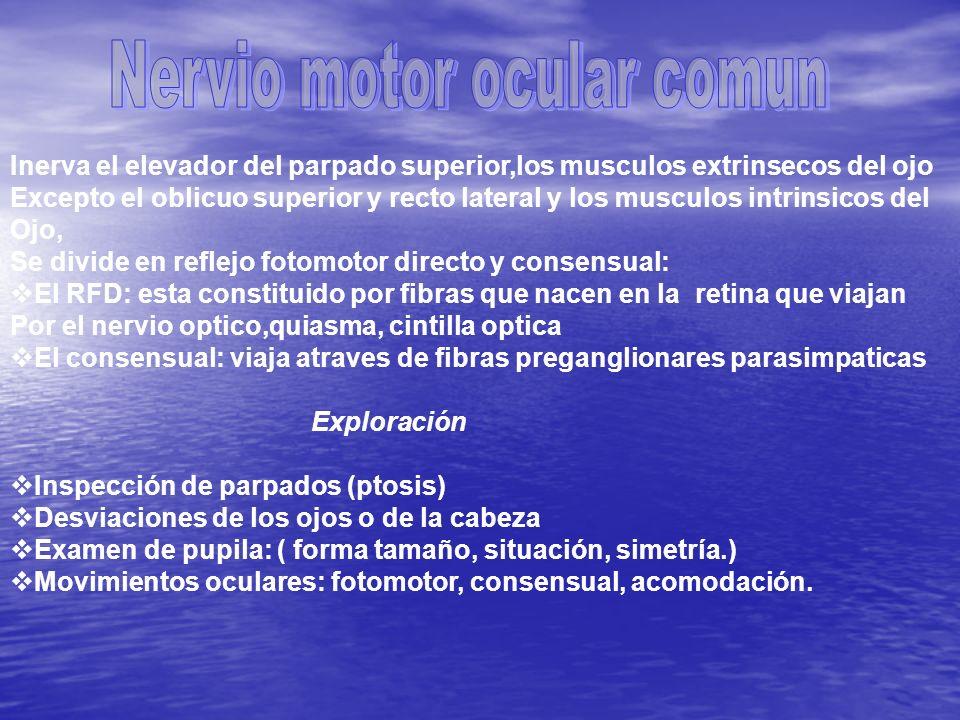 Nervio motor ocular comun