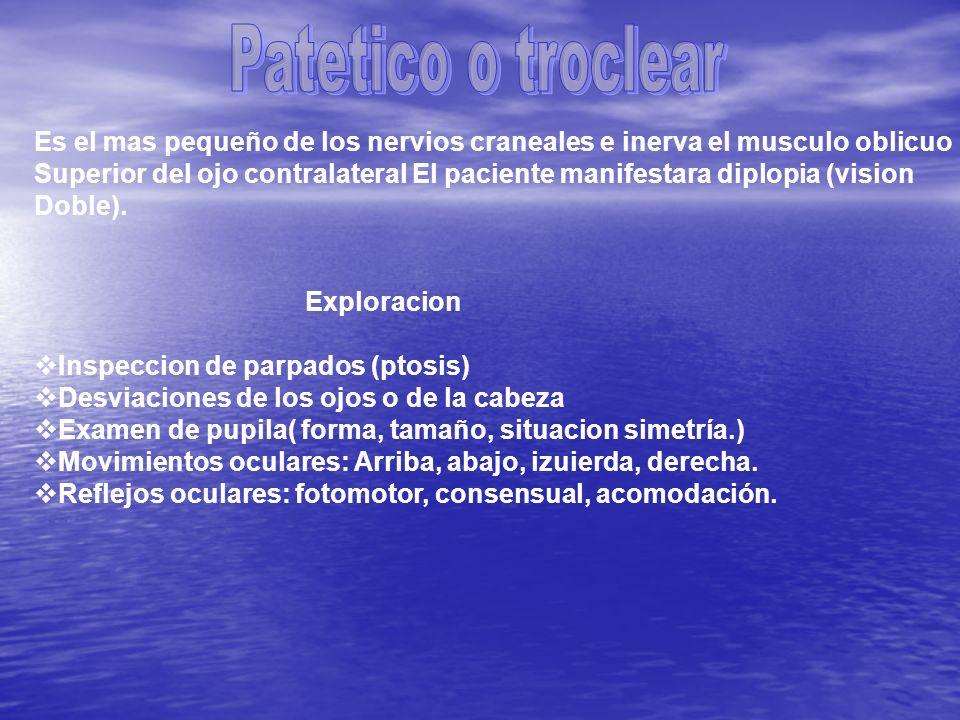 Patetico o troclear Es el mas pequeño de los nervios craneales e inerva el musculo oblicuo.