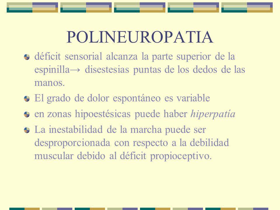 POLINEUROPATIA déficit sensorial alcanza la parte superior de la espinilla→ disestesias puntas de los dedos de las manos.