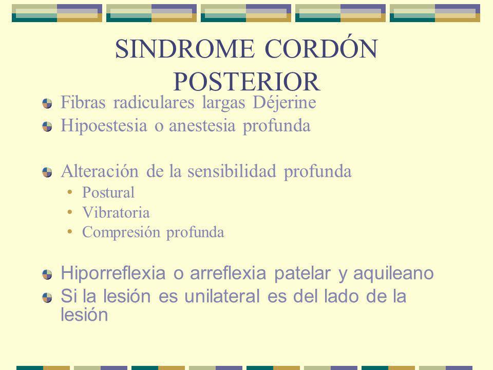 SINDROME CORDÓN POSTERIOR