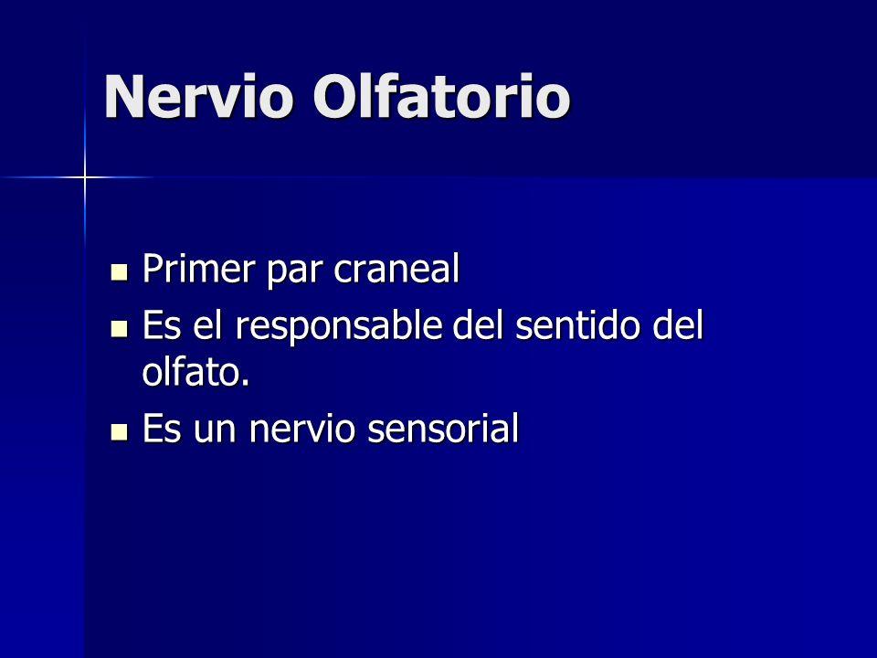 Nervio Olfatorio Primer par craneal