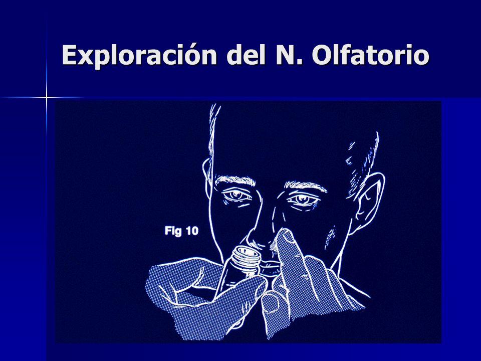 Exploración del N. Olfatorio
