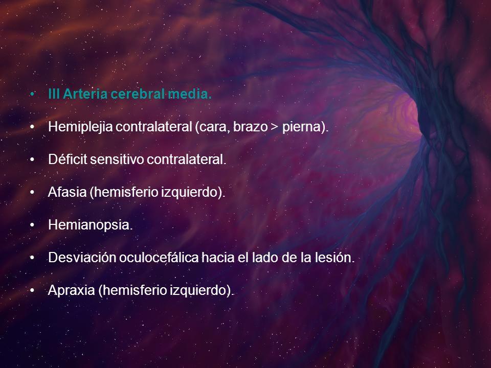 III Arteria cerebral media.