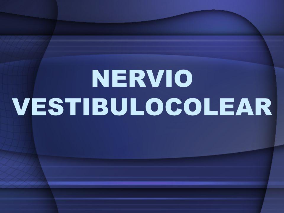 NERVIO VESTIBULOCOLEAR