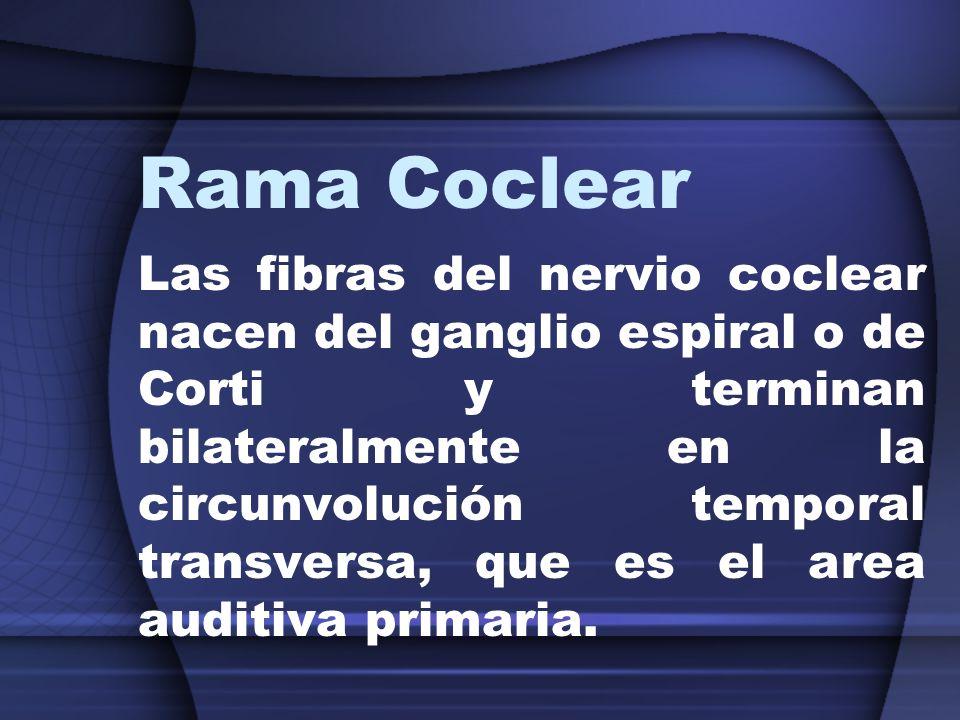 Rama Coclear