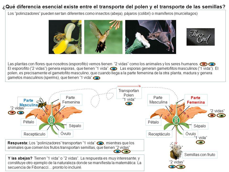 ¿Qué diferencia esencial existe entre el transporte del polen y el transporte de las semillas