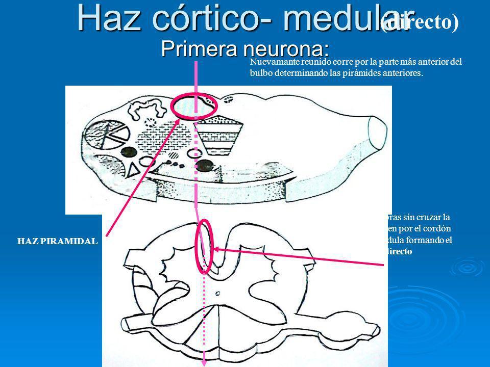 Haz córtico- medular (directo) Primera neurona: