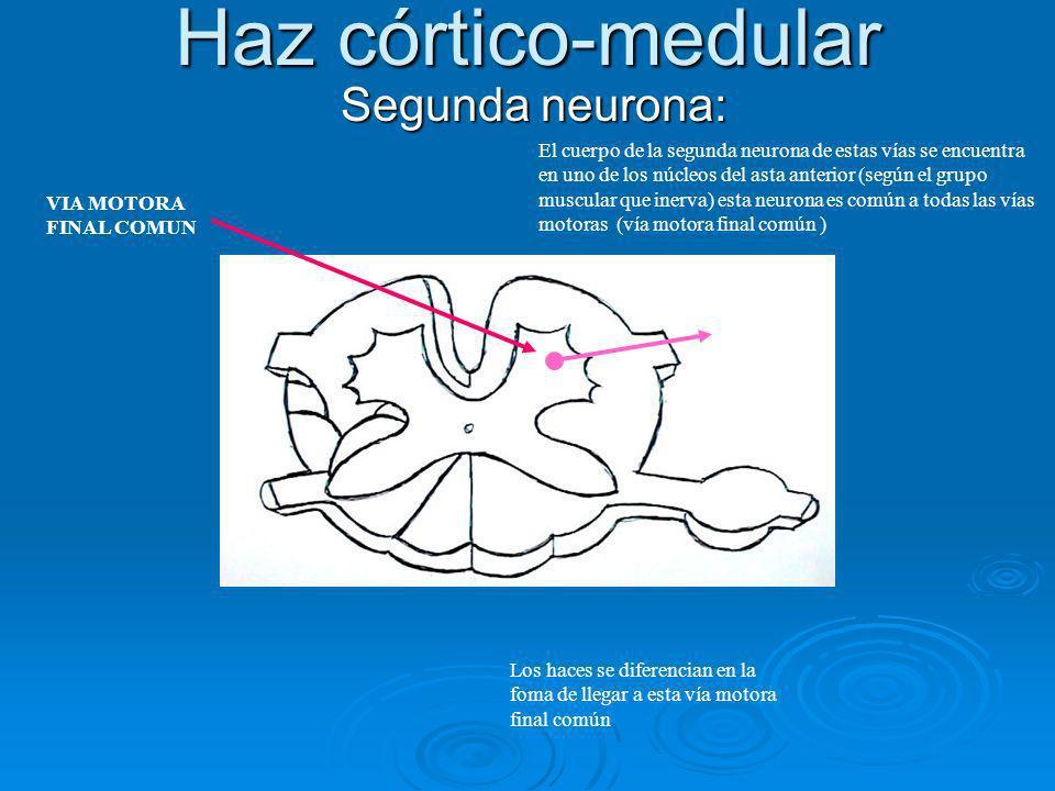 Haz córtico-medular Segunda neurona: