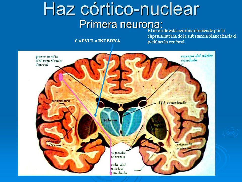 Haz córtico-nuclear Primera neurona: