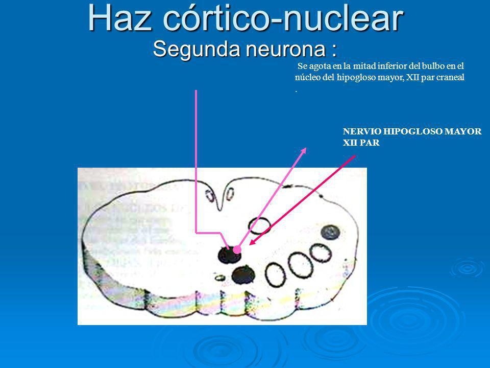 Haz córtico-nuclear Segunda neurona :