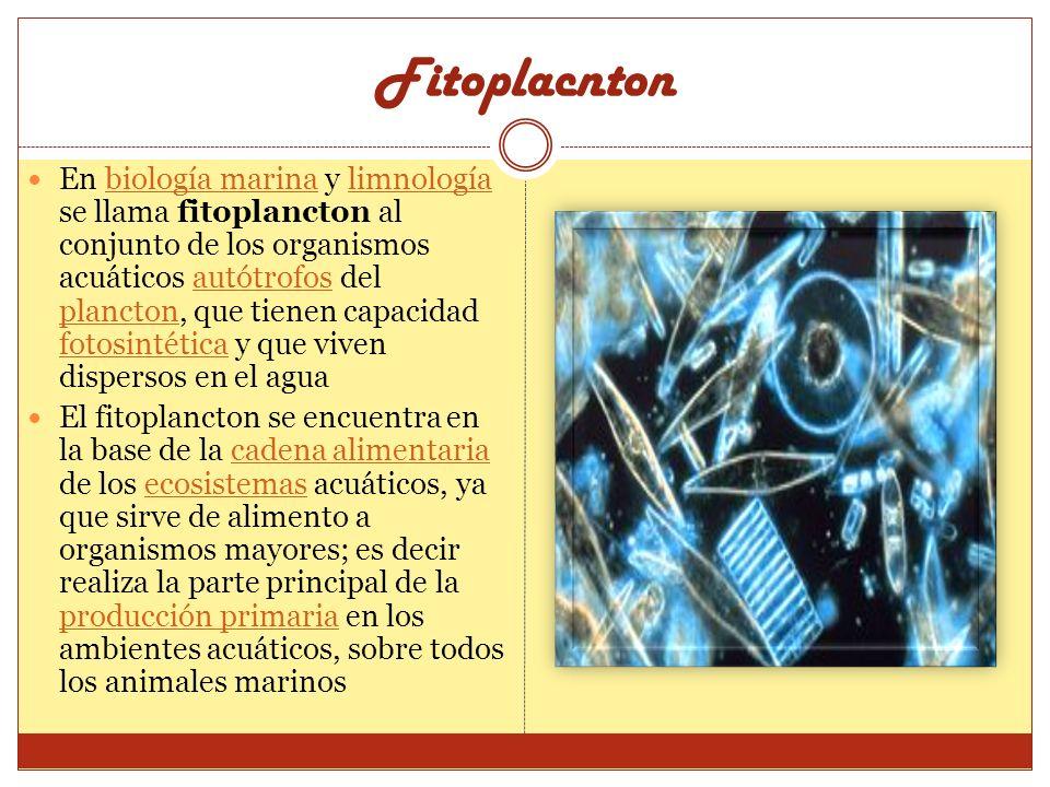 Fitoplacnton