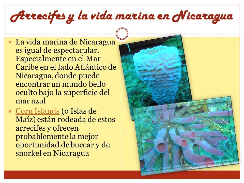 Arrecifes y la vida marina en Nicaragua