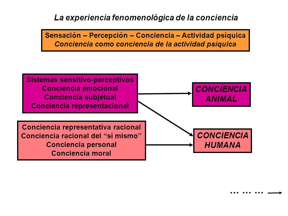 … … … La experiencia fenomenológica de la conciencia CONCIENCIA ANIMAL