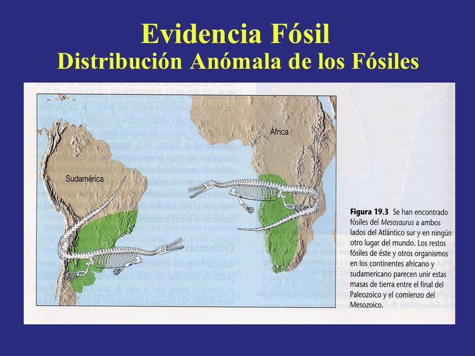 Evidencia Fósil Distribución Anómala de los Fósiles