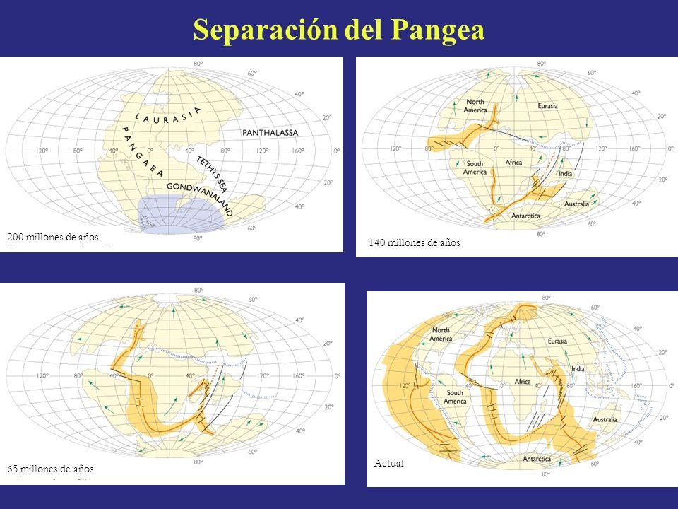 Separación del Pangea 200 millones de años 140 millones de años Actual