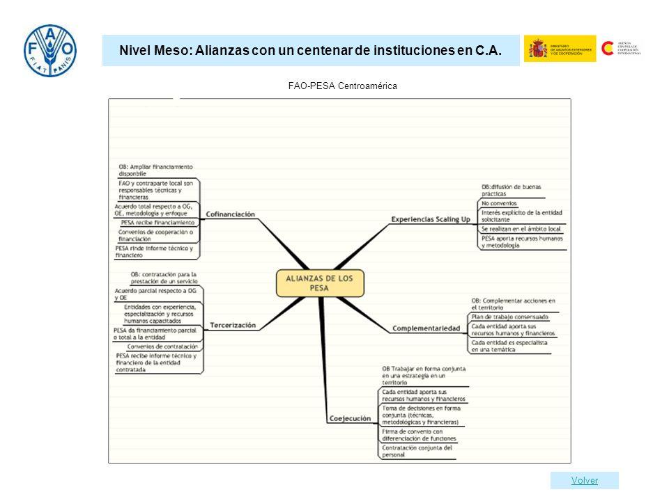 Nivel Meso: Alianzas con un centenar de instituciones en C.A.