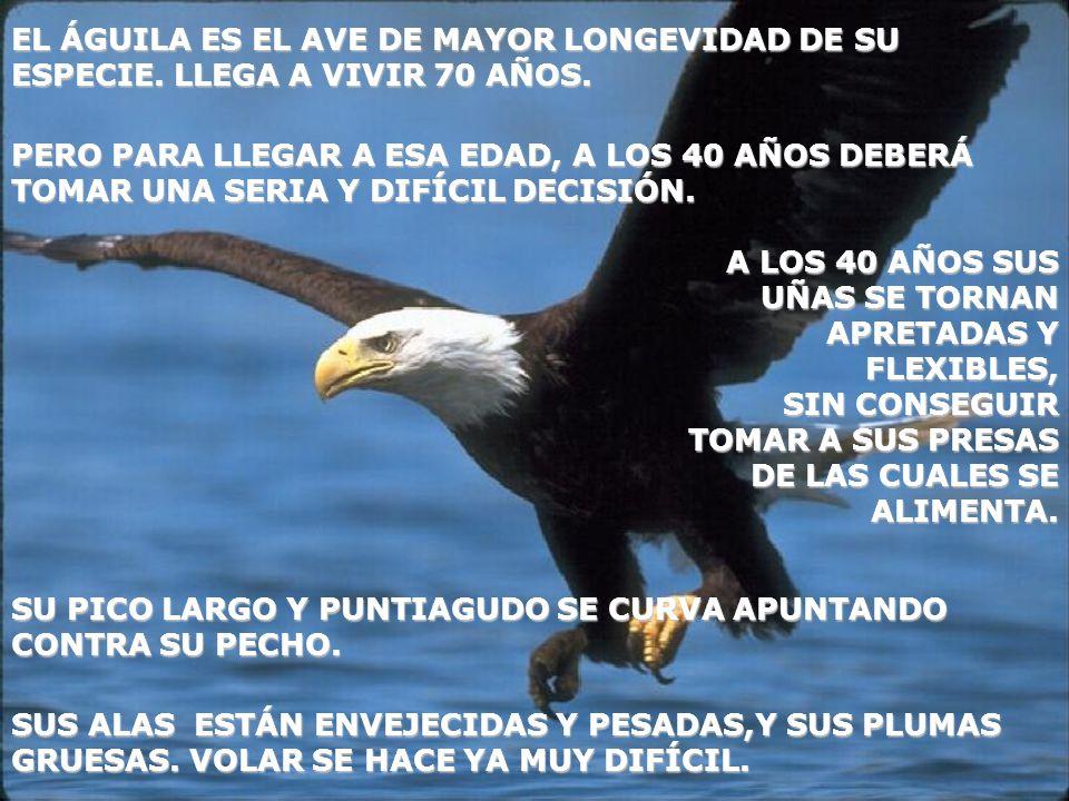 EL ÁGUILA ES EL AVE DE MAYOR LONGEVIDAD DE SU ESPECIE