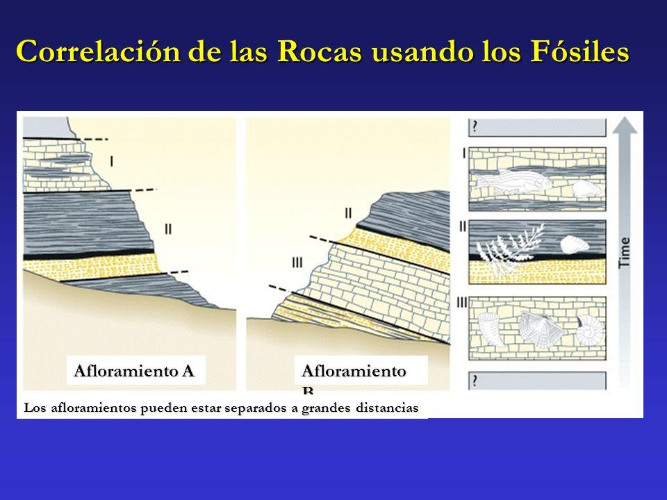 Correlación de las Rocas usando los Fósiles