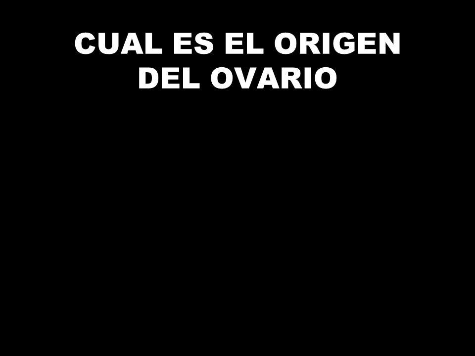 CUAL ES EL ORIGEN DEL OVARIO