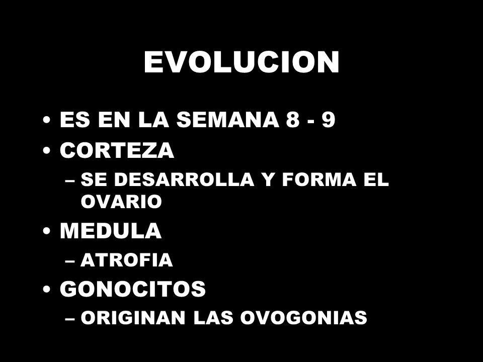 EVOLUCION ES EN LA SEMANA 8 - 9 CORTEZA MEDULA GONOCITOS