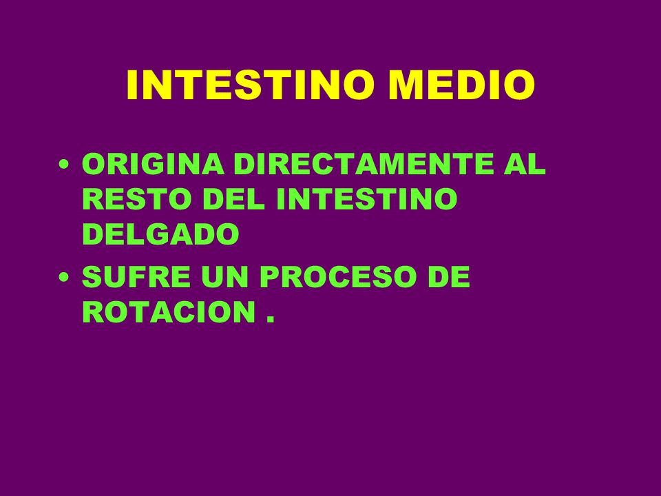 INTESTINO MEDIO ORIGINA DIRECTAMENTE AL RESTO DEL INTESTINO DELGADO