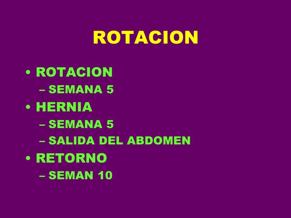ROTACION ROTACION SEMANA 5 HERNIA SALIDA DEL ABDOMEN RETORNO SEMAN 10