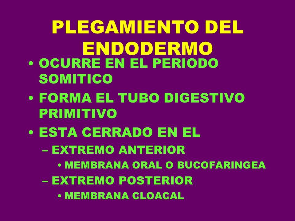 PLEGAMIENTO DEL ENDODERMO