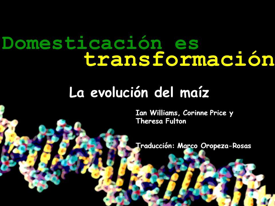 transformación Domesticación es La evolución del maíz