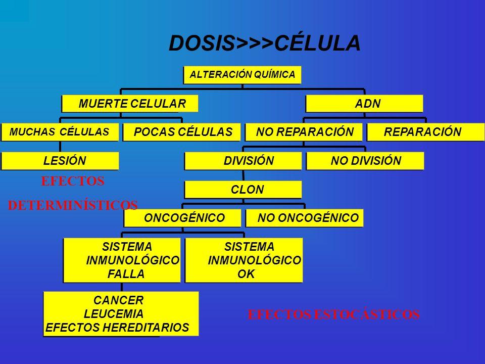 DOSIS>>>CÉLULA