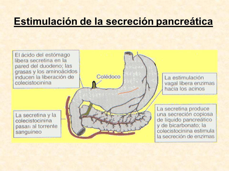 Estimulación de la secreción pancreática