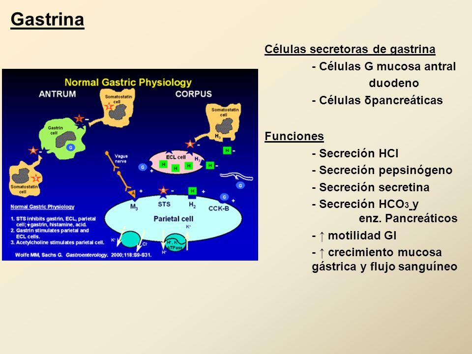 Gastrina Células secretoras de gastrina - Células G mucosa antral