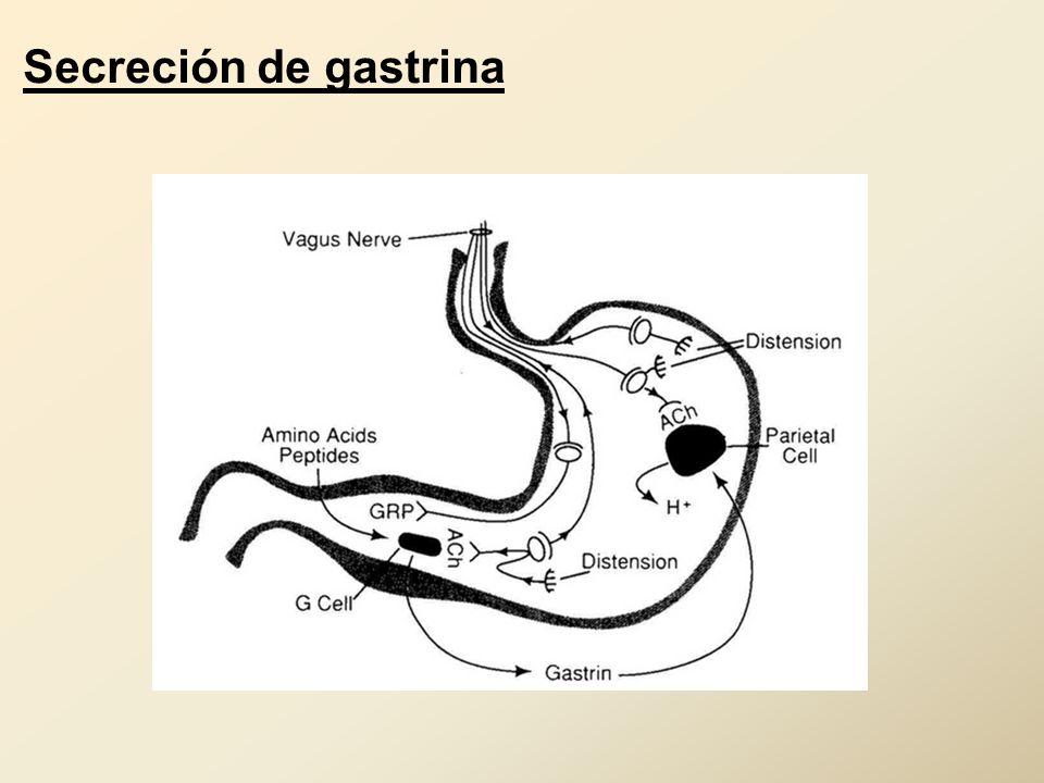 Secreción de gastrina