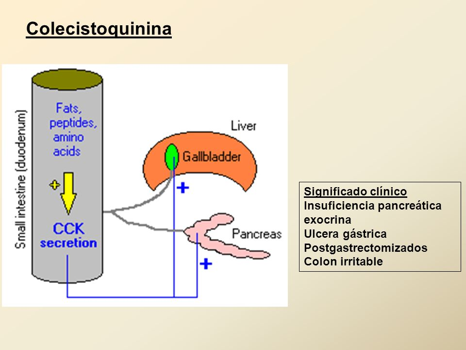 Colecistoquinina Significado clínico