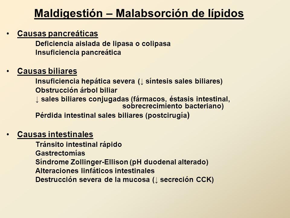 Maldigestión – Malabsorción de lípidos