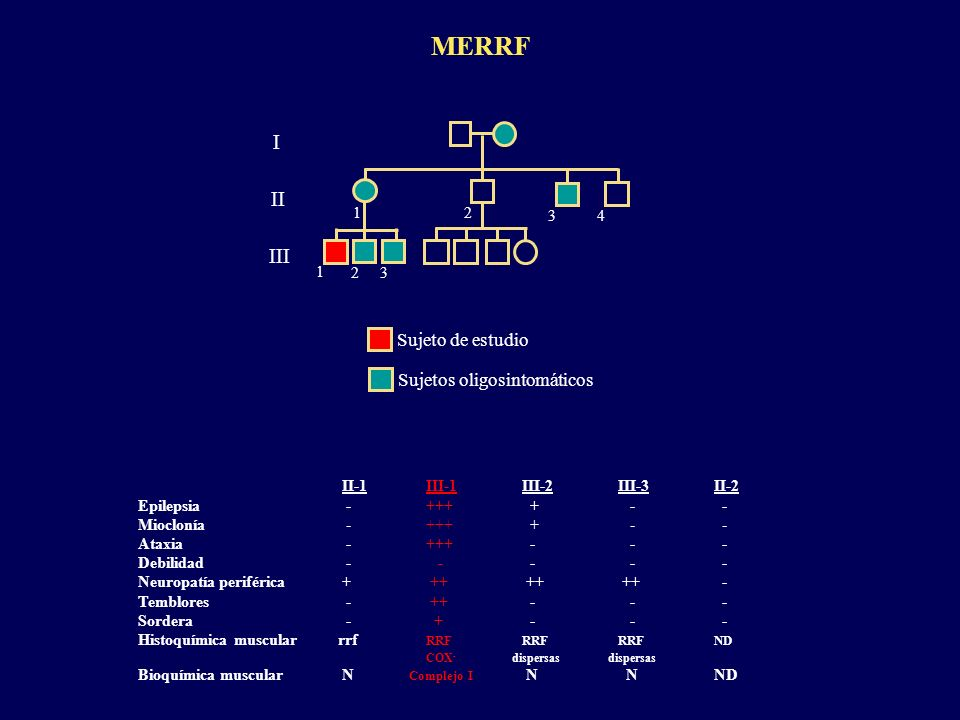 MERRF I I I I I I Sujeto de estudio Sujetos oligosintomáticos 1 2 3 4