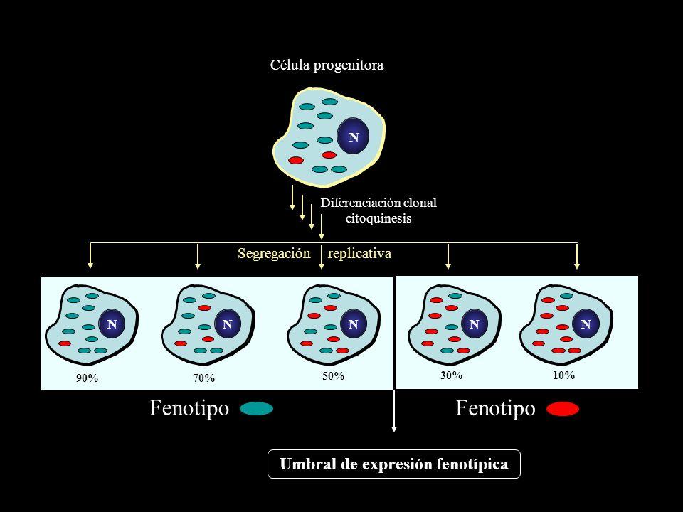 Diferenciación clonal