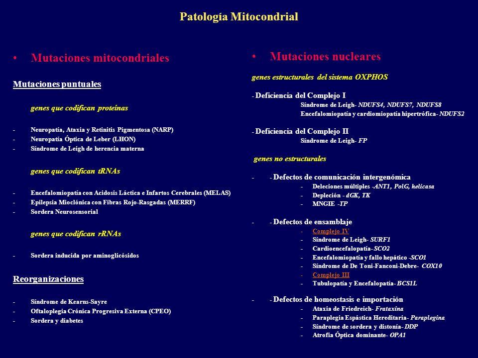 Patología Mitocondrial