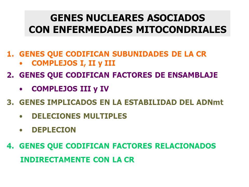 GENES NUCLEARES ASOCIADOS CON ENFERMEDADES MITOCONDRIALES