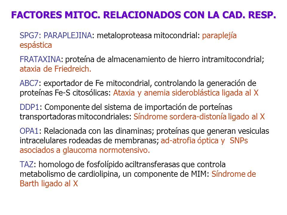 FACTORES MITOC. RELACIONADOS CON LA CAD. RESP.