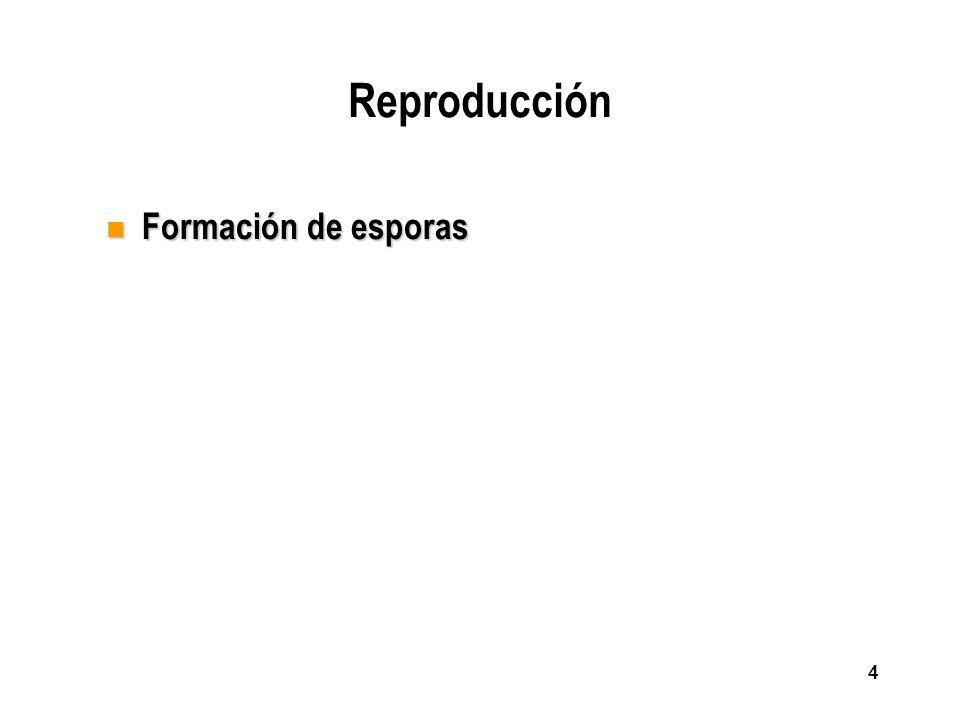 Reproducción Formación de esporas
