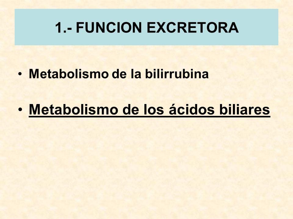 Metabolismo de los ácidos biliares