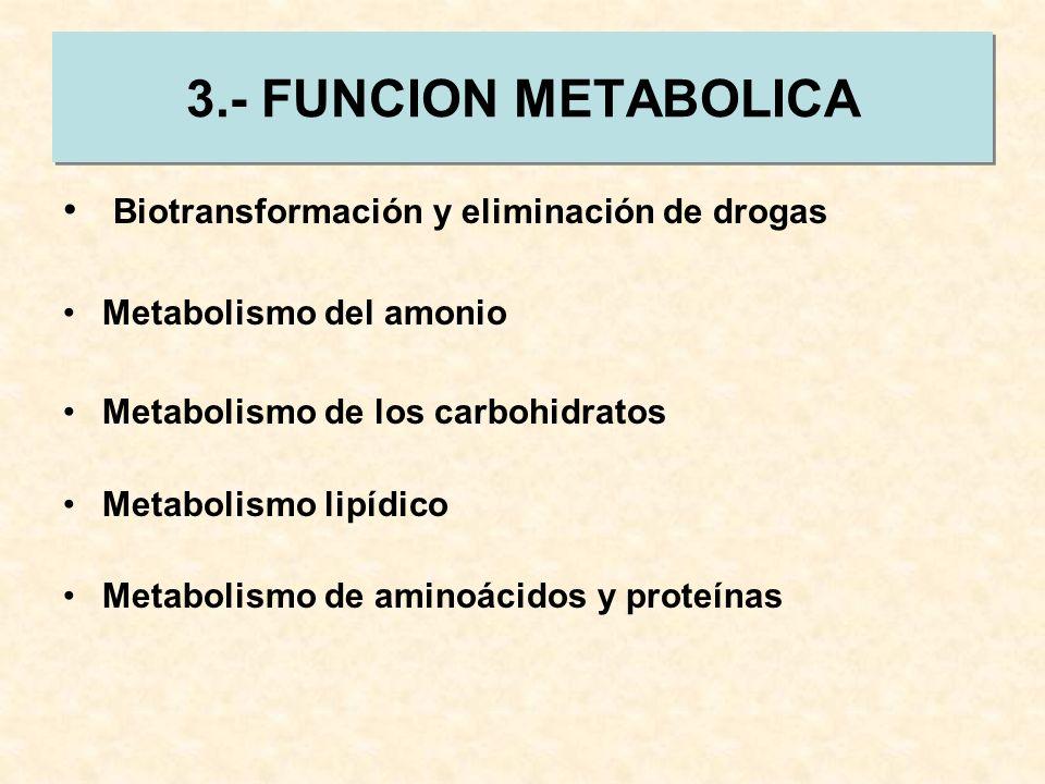 3.- FUNCION METABOLICA Biotransformación y eliminación de drogas