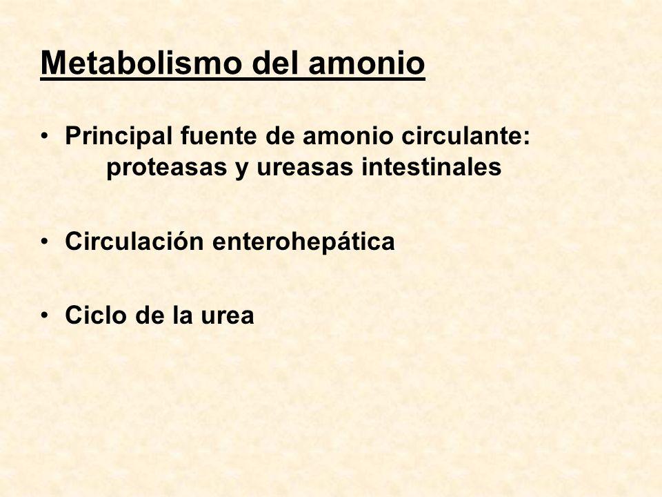 Metabolismo del amonio