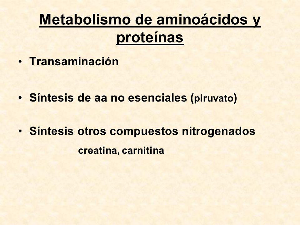 Metabolismo de aminoácidos y proteínas
