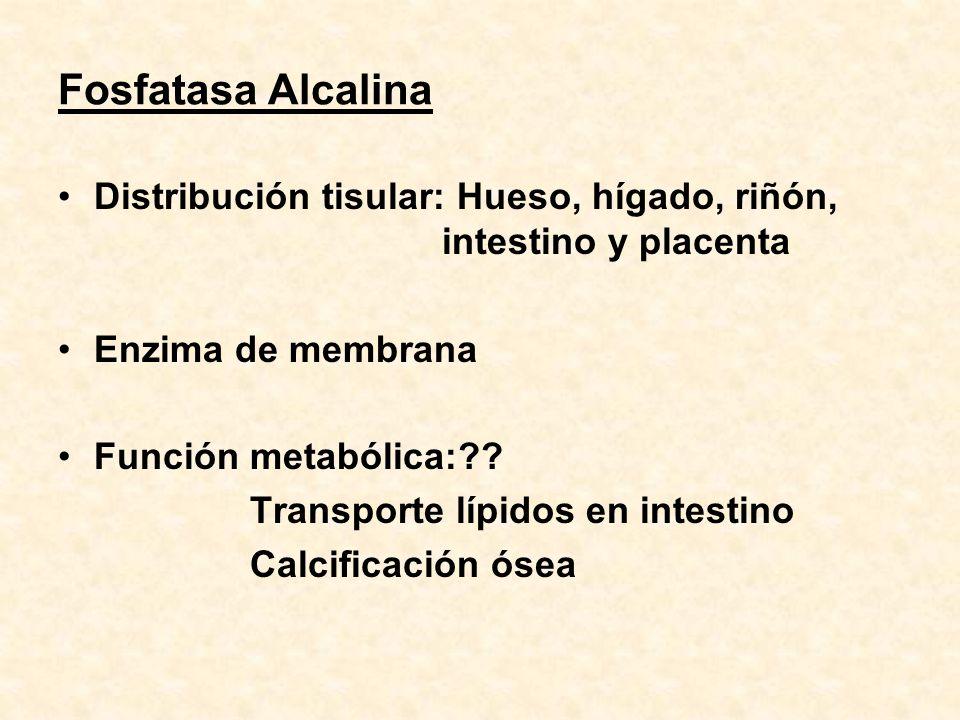 Fosfatasa Alcalina Distribución tisular: Hueso, hígado, riñón, intestino y placenta. Enzima de membrana.