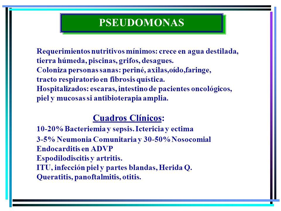 PSEUDOMONAS Requerimientos nutritivos mínimos: crece en agua destilada, tierra húmeda, piscinas, grifos, desagues.
