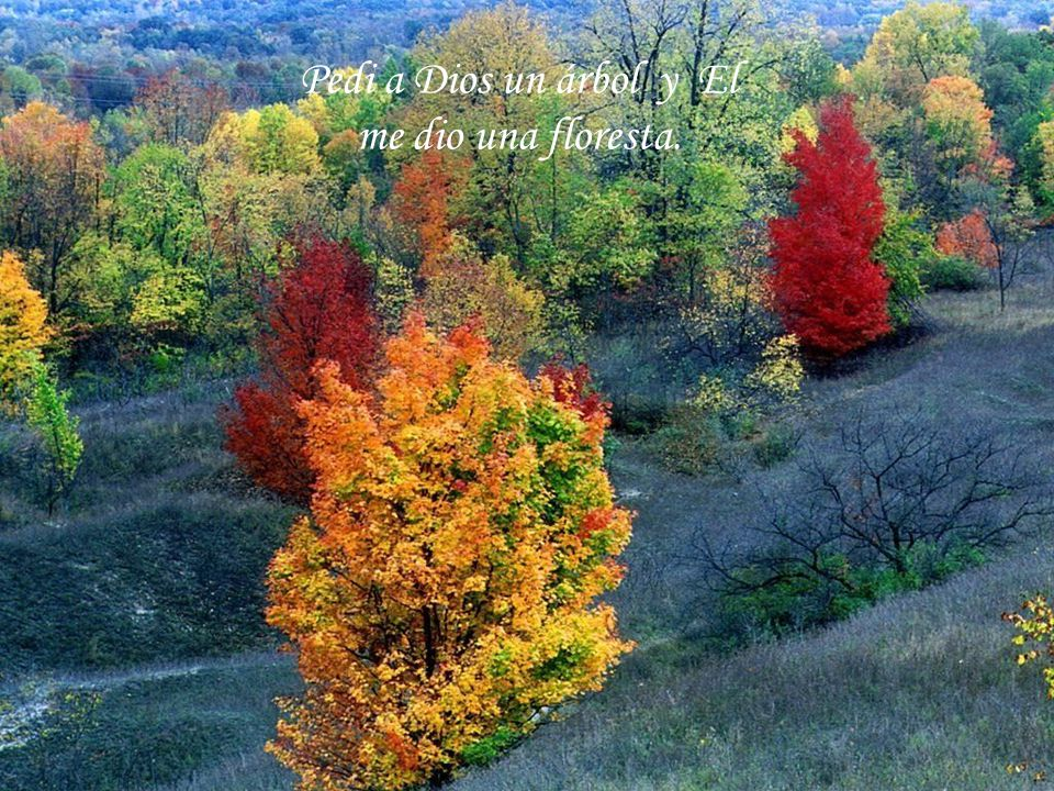 Pedi a Dios un árbol y El me dio una floresta.