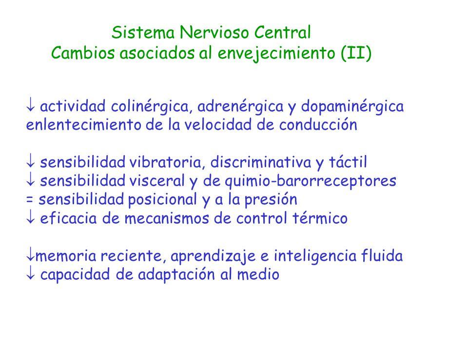 Sistema Nervioso Central Cambios asociados al envejecimiento (II)
