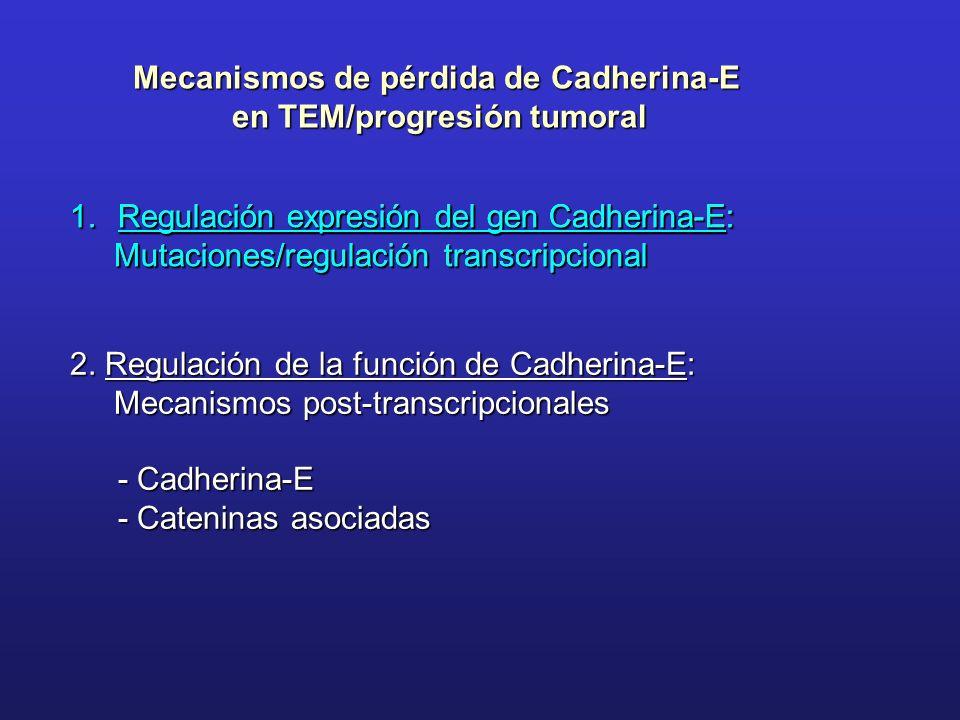 Mecanismos de pérdida de Cadherina-E en TEM/progresión tumoral