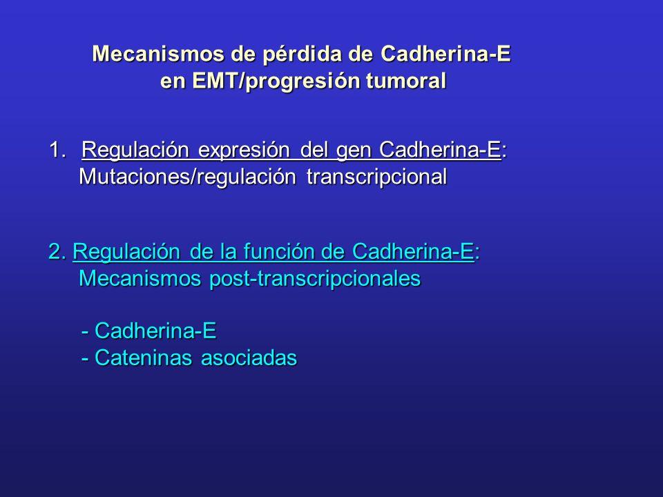 Mecanismos de pérdida de Cadherina-E en EMT/progresión tumoral